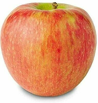 Apple Honeycrisp
