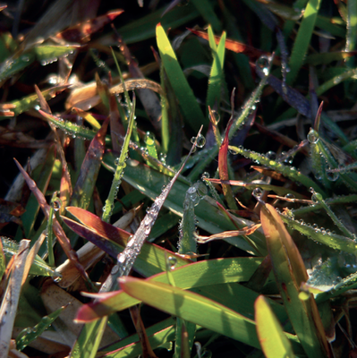 'Dewy Grass' Greeting Card (Set of 10)