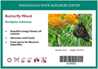Butterfly Milkweed Gallon