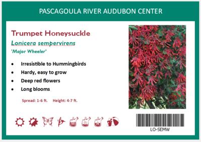 Trumpet Honeysuckle