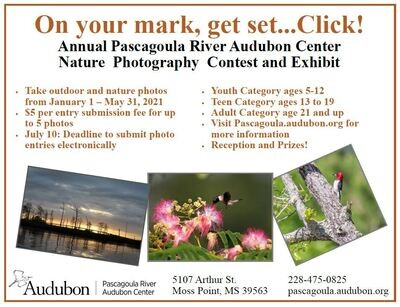 Photo Contest Fee Per Photo
