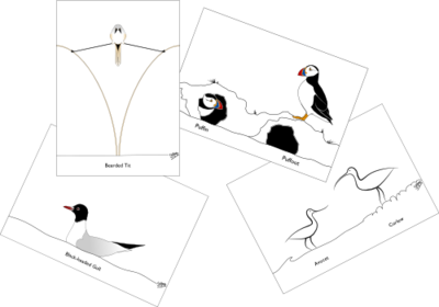 Birds PC1