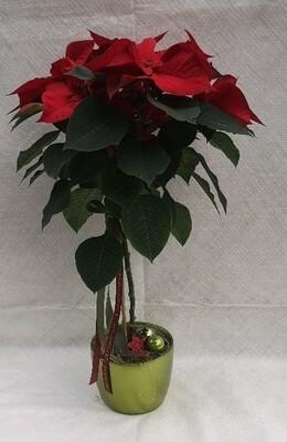 Weihnachtsstern Stamm 17cm mit UT, dekoriert