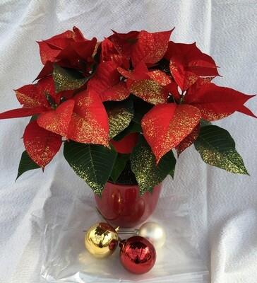 Weihnachtsstern 13cm Glimmer /Schnee