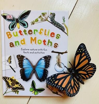 Butterflies + Moths
