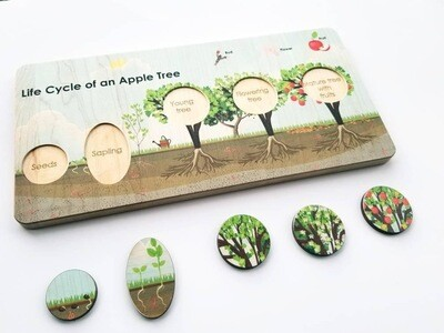 Montessori Life Cycle Of The Apple Tree Board