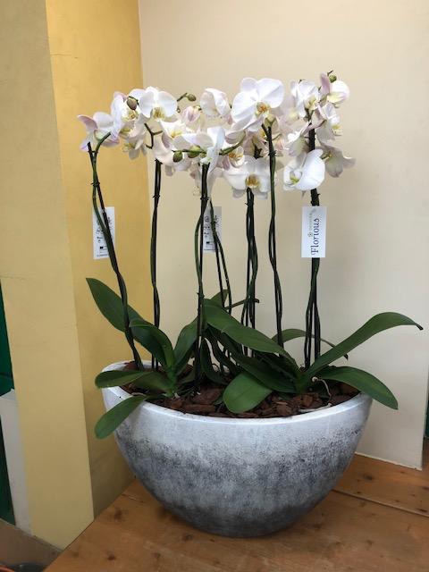 Orchideecompositie groot