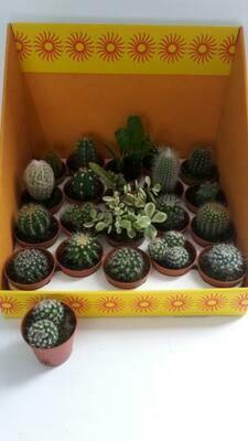 Cactus pot 6cm set van 20stuks mix