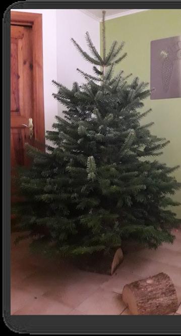 Kerstboom Nordmann op houten voet 1.75-2m