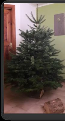 Kerstboom Nordmann op houten voet 2-2.25m