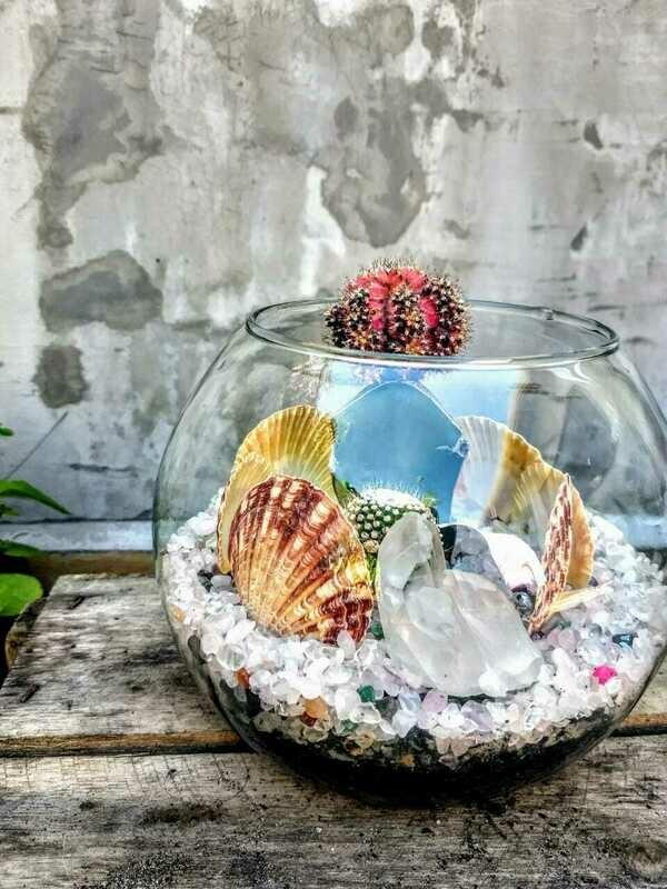 Terrário aquário médio