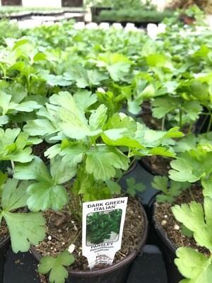 Herb - Parsley (Multiple Varieties)