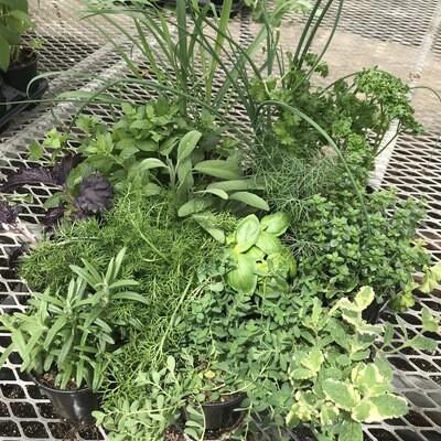 """Herbs - 4"""" Many Varieties"""