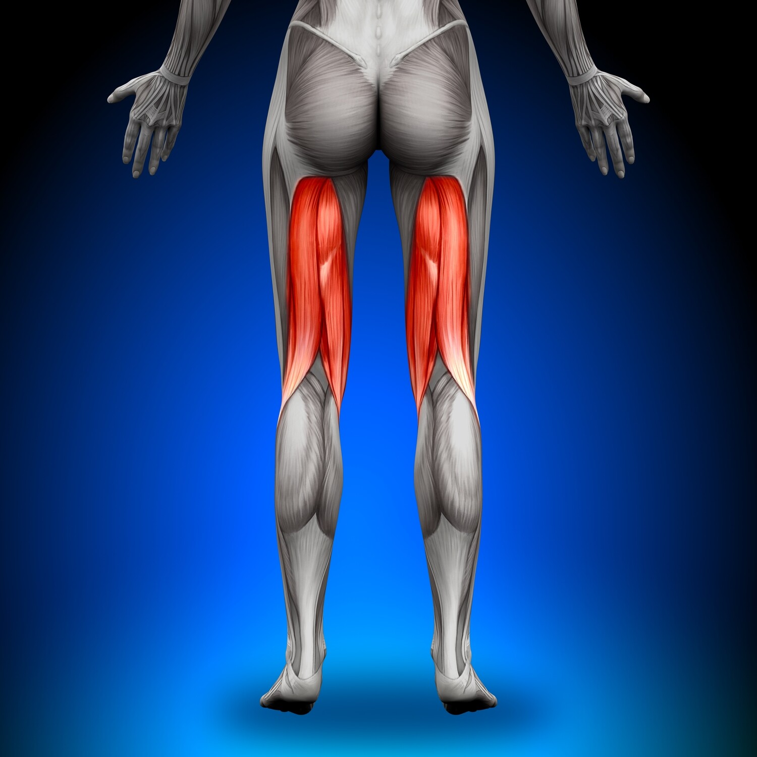 Hamstring - Home Stretching and Strengthening Program