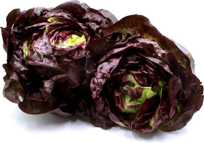 Hydroponic Lettuce (red)