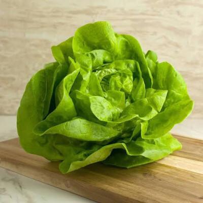 Hydroponic Lettuce (green)