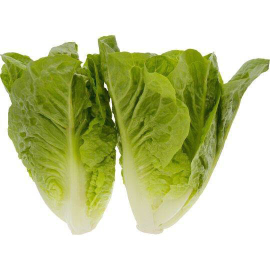 Cos Lettuce 2 Pack