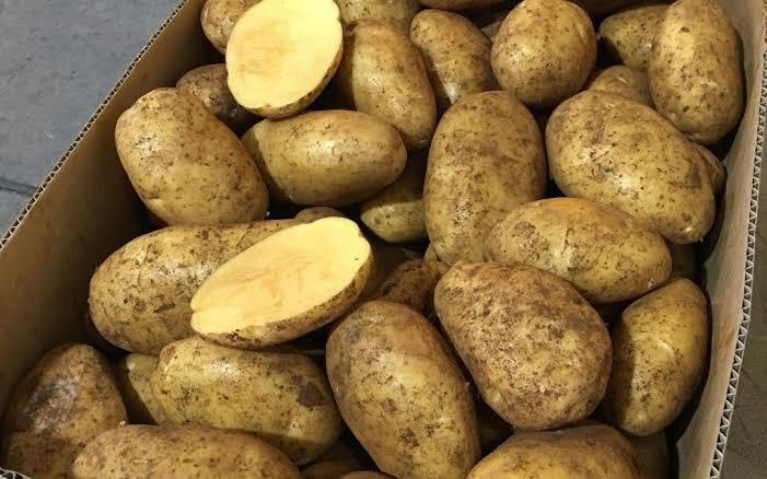Dutch Cream Potatoes