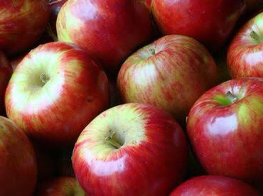 Apples Jonathan