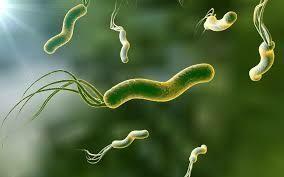 幽門螺旋干菌 Helicobacter Pylori