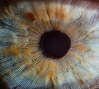 糖尿眼 / Diabetic Retinopathy