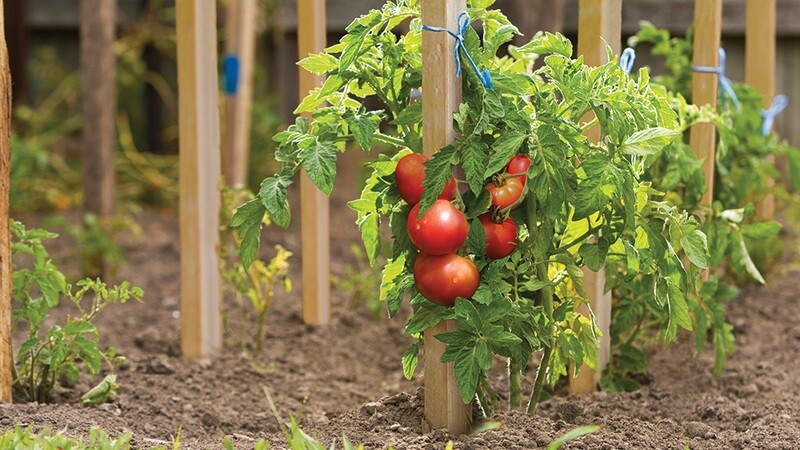 Garden Stakes 25 CT Box - Great for staking plants, tomato, trees or shrubs. Starting at $.96 each! Free Shipping.