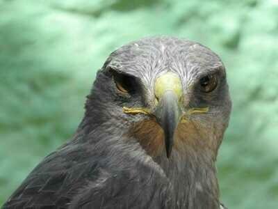Falconry Experience Mautone