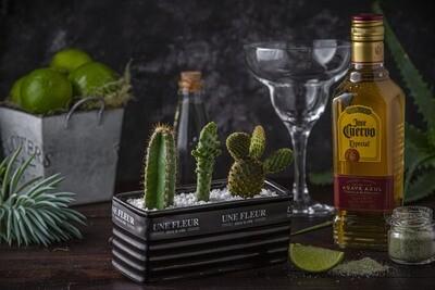 Cactos em vaso  e Kit Drink Margarita (Rendimento 7 receitas)