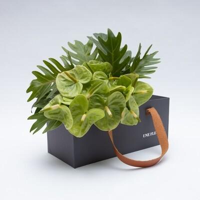 Caixa Presente com de anturios verdes e folhas xanadu