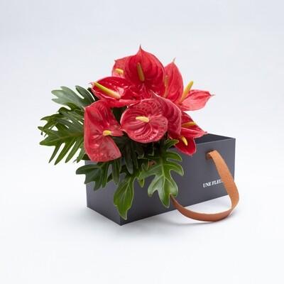 Caixa Presente com de antúrios vermelhos e folhas xanadu