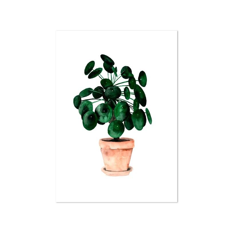 UFO plant