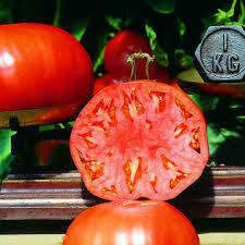 Tomate Babuschka