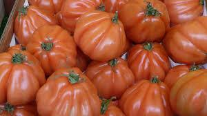 Tomate Coeur de boeuf Albenga
