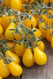 Tomate Minipoire jaune