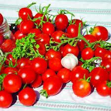 Tomate Principe Borghese (datte)