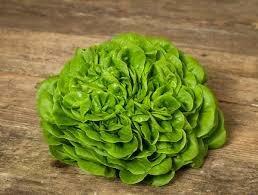 Salade salanova verte (6p)