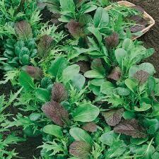 salade à tondre asiatique (6p)