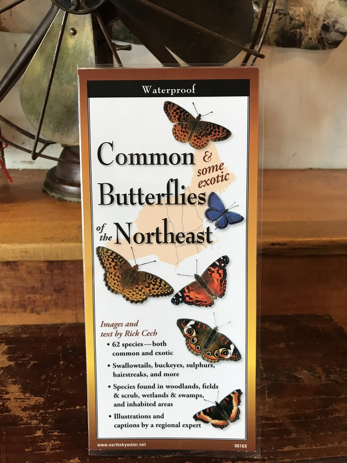 Common Butterflies of NE Guide