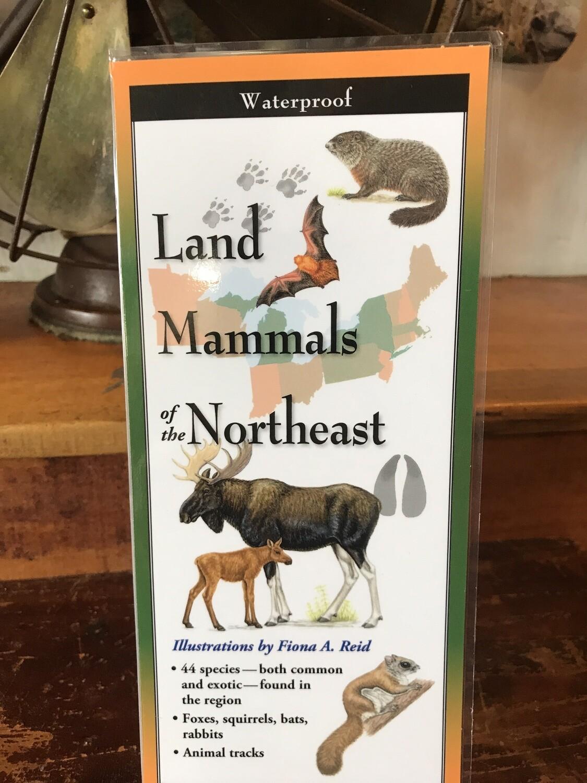 Land Mammals Guide