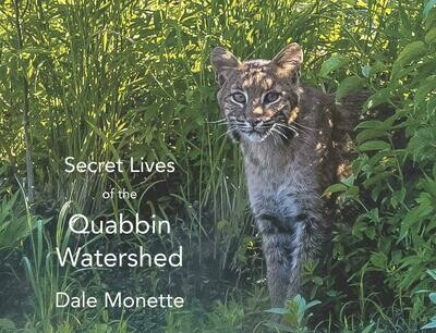 Secret Lives of Quabbin Watershed