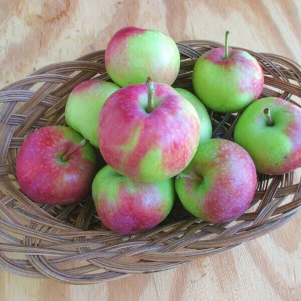 Vista Bella Apples - (3lb Bag)