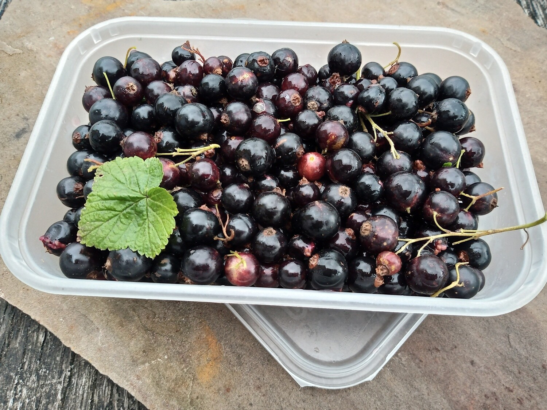 Organic Fruit Box 6th August