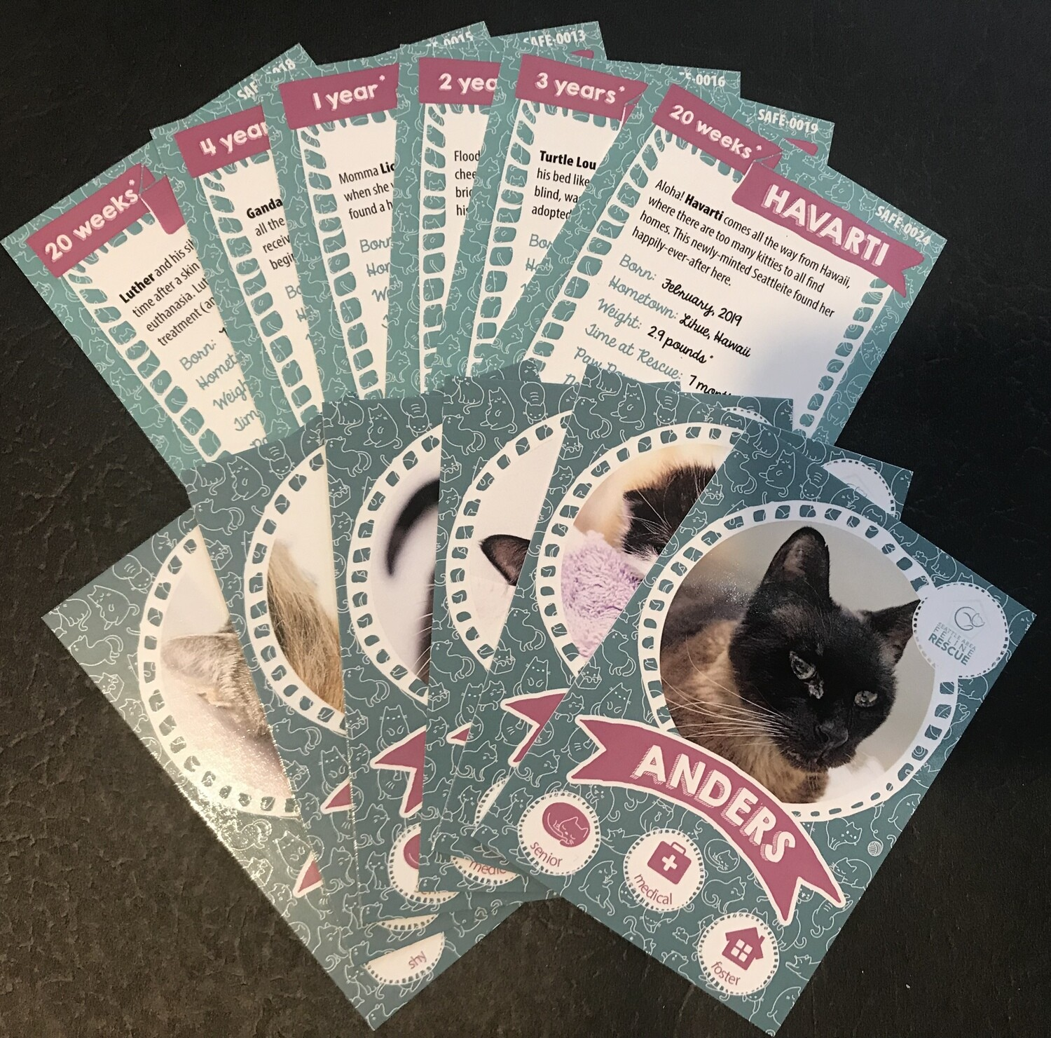 SAFe Kitties Trading Cards - 12 pack