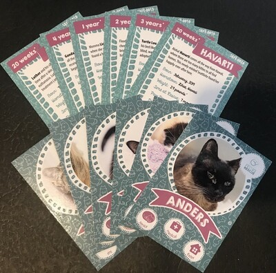 SAFe Kitties Trading Cards - 6 pack