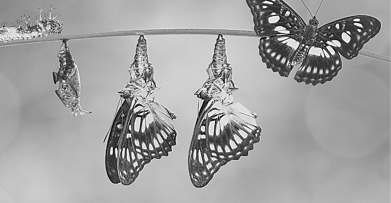 From Trauma to Transformation 1-1 coaching