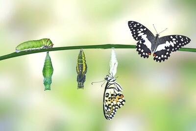 Trauma-Transformation Journey Group Coaching Program
