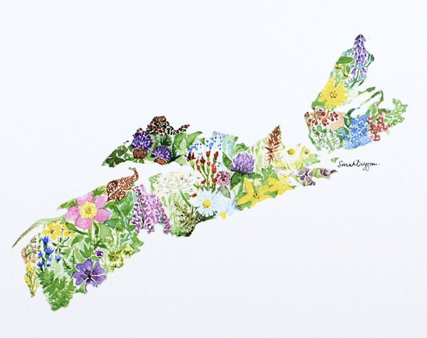 Wildflowers of Nova Scotia - Sarah Duggan