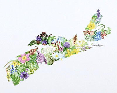 Sarah Duggan Wildflowers of Nova Scotia Print