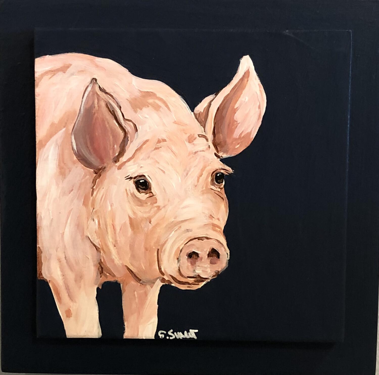 Pig on Midnight Blue