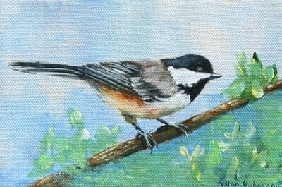 Ready...set (Chickadee)